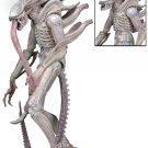 1200x 51614 Albino_Alien