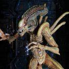 sewer-alien13