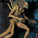 sewer-alien6