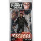 29036_Caesar_pkg